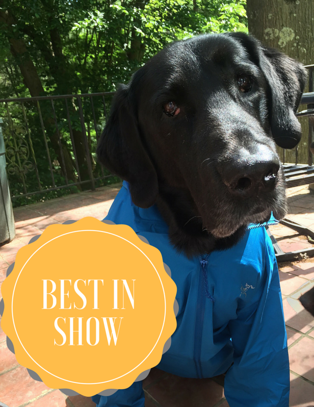 Fast Big Dog, Arc'teryx Norvan Jacket, Best in Show, gear review, jacket review, FasterSkier gear review